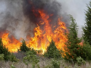 Леса на Донбассе горят. Террористы пожарных не пускают